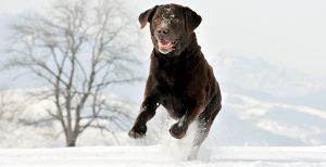 dog_days_winters